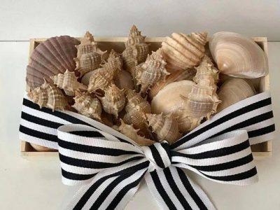 Mixed Seashells for Decoration